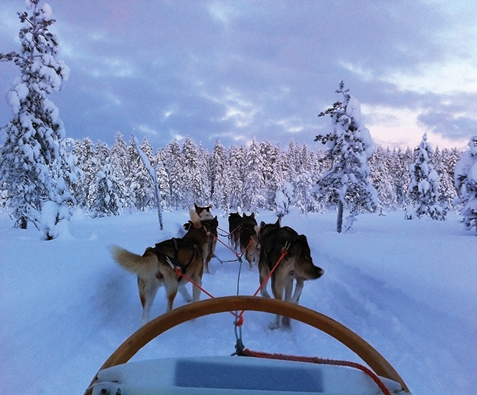 Dog sledding in Ruka