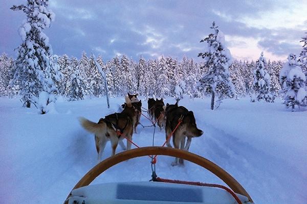 Dog sledding in Ruka
