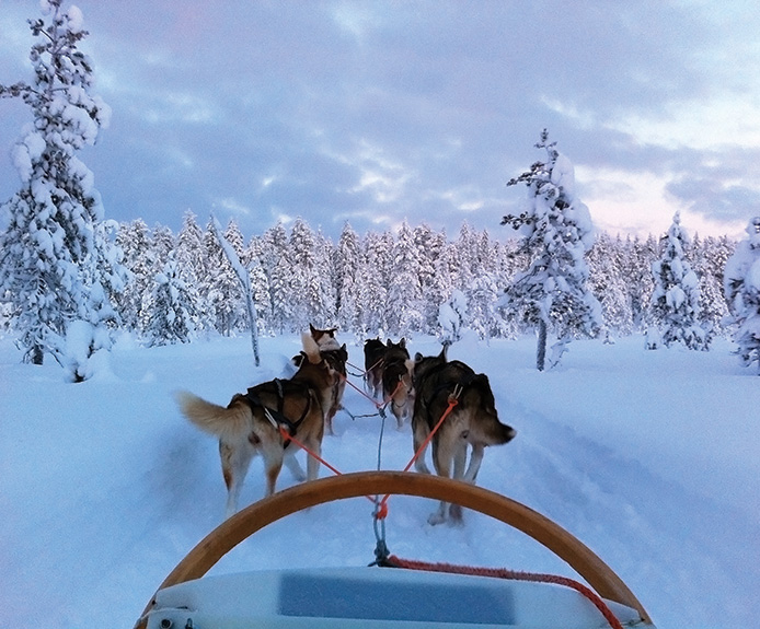 Dog sledding in Ruka, Finland