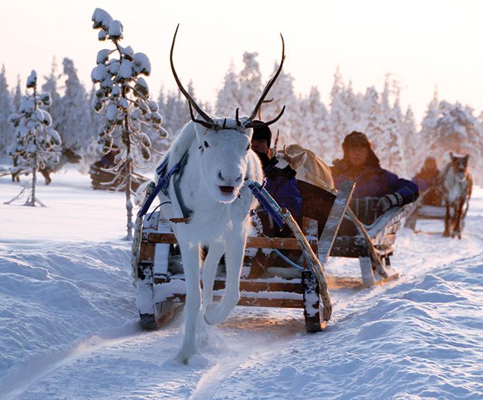 Reindeer sleigh ride in Salla, Finland