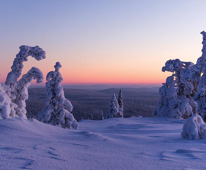 Frozen trees in Yllas, Finland